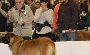 Mostra Internazionale Speciale Leonberger di Verona