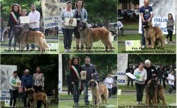 RISULTATI XXVII RADUNO DEL CLUB ITALIANO DEL LEONBERGER