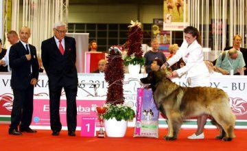 Campioni del Mondo 2013  al World Dog Show di Budapest.