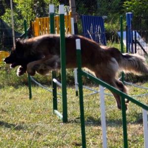 agility-dog-9679a69f69730762c2c70736de9de4fca6decb69